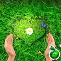 Здоровая сердечно-сосудистая система